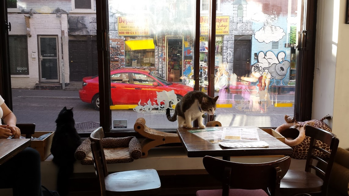 HappyCatCafe3
