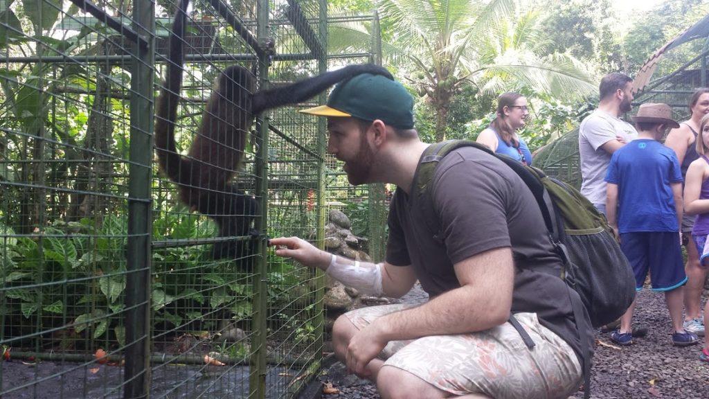proyecto asis baby monkey